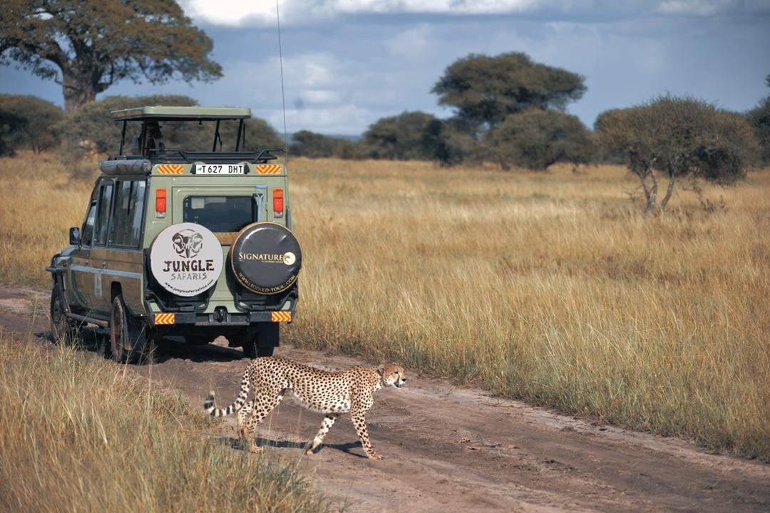 Adventurous Jungle Safari